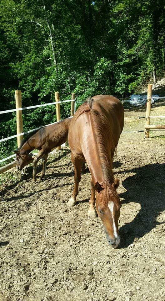 Cavalli B&B Le Colline di Bana 2