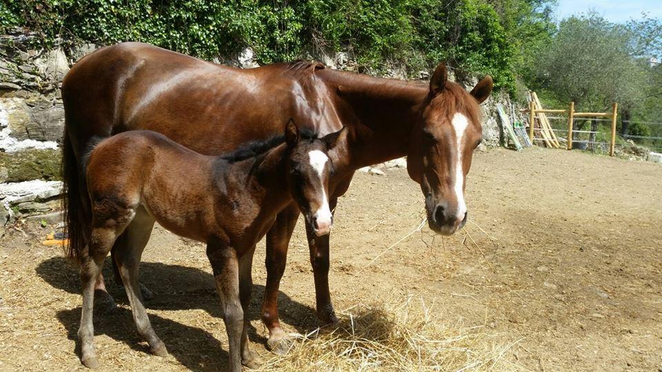 Cavalli B&B Le Colline di Bana 1